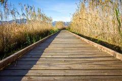 Hölzerner Weg in einem Vogelobservatorium, im Sumpfgebietnaturpark La Marjal in Pego und in Oliva stockbild