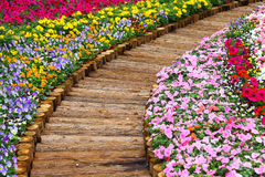 Hölzerner Weg im Blumenbeet Stockfotografie