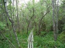 Hölzerner Weg mitten in den Bäumen Lizenzfreies Stockbild