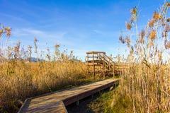 Hölzerner Weg und Turm in einem Vogelobservatorium, im Sumpfgebietnaturpark La Marjal in Pego und in Oliva stockbild
