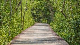 Hölzerner Wegweg zum tropischen Wald Lizenzfreies Stockfoto