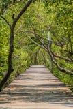 Hölzerner Wegweg zum tropischen Wald Stockbilder