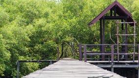 Hölzerner Wegweg zum tropischen Wald Lizenzfreies Stockbild