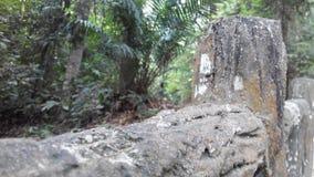 Hölzerner Zaun im Holz Stockfotos