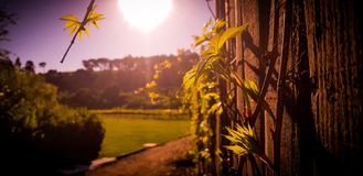 Hölzerner Zaun mit Anlagen auf Weinbauernhof stockfoto
