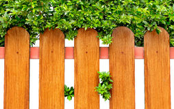 Hölzerner Zaun und grüner Busch Stockfotos