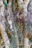 Hölzernes Baum-Beschaffenheits-Hintergrund-Muster Lizenzfreies Stockbild