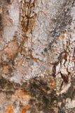 Hölzernes Baum-Beschaffenheits-Hintergrund-Muster Stockbilder