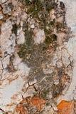 Hölzernes Baum-Beschaffenheits-Hintergrund-Muster Stockfoto