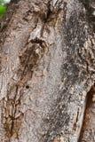 Hölzernes Baum-Beschaffenheits-Hintergrund-Muster Lizenzfreies Stockfoto