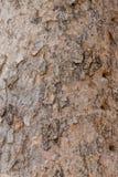 Hölzernes Baum-Beschaffenheits-Hintergrund-Muster Lizenzfreie Stockbilder