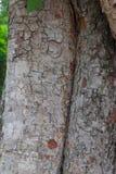 Hölzernes Baum-Beschaffenheits-Hintergrund-Muster Stockfotos