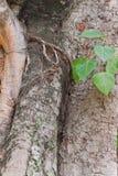 Hölzernes Baum-Beschaffenheits-Hintergrund-Muster Lizenzfreie Stockfotos
