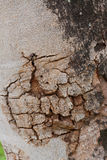 Hölzernes Baum-Beschaffenheits-Hintergrund-Muster Lizenzfreie Stockfotografie