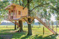 Hölzernes Baumhaus in der Eiche mit Gras stockfoto