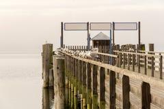 Hölzernes Dock mit den Vögeln, die auf ihm sitzen lizenzfreies stockbild