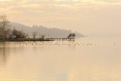 Hölzernes Dock während des Winters mit Enten lizenzfreie stockfotos