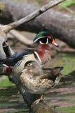 Hölzernes Duck Pair lizenzfreies stockbild