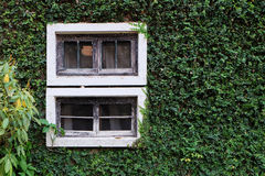 Hölzernes Fenster auf der grünen Wand Stockfoto