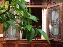 Hölzernes Fenster der Weinlese offen mit Vorhang und Blättern Lizenzfreies Stockbild