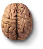 Hölzernes Gehirn stockfoto