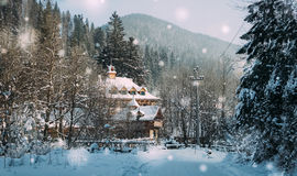 Hölzernes Häuschen unter dem Kiefernwald Stockbilder