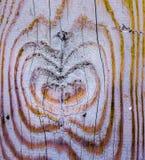 Hölzernes Herz gemacht von den Ringen auf einem Baumstamm, Herz innerhalb des Holzes Lizenzfreies Stockfoto