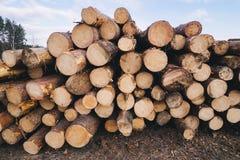 Hölzernes Kiefernstaplungsbauholz für Baugebäude Stockfotos