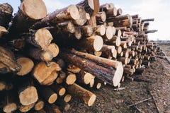 Hölzernes Kiefernstaplungsbauholz für Baugebäude Lizenzfreie Stockbilder