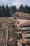 Hölzernes Kiefernstaplungsbauholz für Baugebäude Stockbild