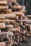 Hölzernes Kiefernstaplungsbauholz für Baugebäude Lizenzfreies Stockbild