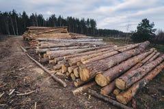 Hölzernes Kiefernstaplungsbauholz für Baugebäude Stockbilder