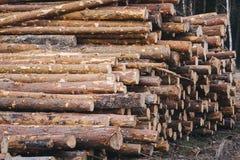 Hölzernes Kiefernstaplungsbauholz für Baugebäude Lizenzfreie Stockfotos