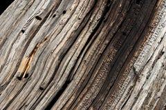 Hölzernes Korn im alten Baum-Protokoll Lizenzfreies Stockbild