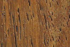 Hölzernes Korn (Mahagonibaum) stockfotografie