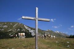 Hölzernes Kreuz und Kühe auf dem Berg Lizenzfreie Stockfotografie