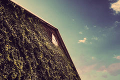 Hölzernes Lager mit eco freundlicher grüner Wand mit blauem Himmel Lizenzfreie Stockbilder