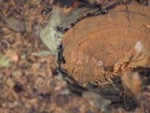 Hölzernes natürliches sägte Klotz Nahaufnahme, Beschaffenheit für Hintergrund, Draufsicht, Ebenenlagefoto lizenzfreie stockfotos