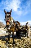 Hölzernes Pferd, das einen Warenkorb zieht Stockfotos