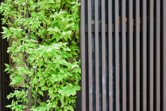 Hölzernes und grünes Blatt Lizenzfreies Stockfoto