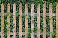 Hölzernes und grünes Gras Stockfoto