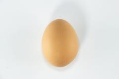 Höna för healt för mat för äggäggprotein Fotografering för Bildbyråer
