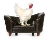 Höna på en soffa arkivfoto