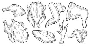 Hönasnitt, hönadelar stock illustrationer