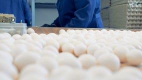 Hönsarbetare för feg lantgård som sorterar ägg på fabrikstransportören Industriell produktionslinje för hönseri lager videofilmer