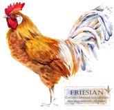 Hönslantbruk Höna föder upp serie inhemsk illustration för lantgårdfågelvattenfärg stock illustrationer