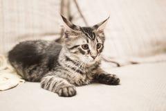 Hören das Kätzchen, das auf dem Sofa liegt Lizenzfreie Stockbilder