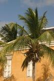 Hören Sie die palmtrees Stockbild