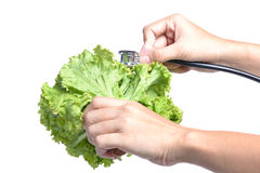 Hörlurar och grönsaker Royaltyfri Bild