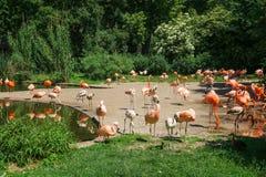 Hörn för flamingo` s arkivfoto